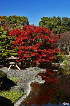 The Japanese garden behind Safe Harbor House