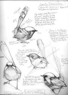Animal Art Sketchbook Drawings New Ideas Sketchbook Drawings, Bird Drawings, Animal Drawings, Pencil Drawings, Drawing Birds, Sketching, Animal Sketches, Art Sketches, Nature Sketches Pencil
