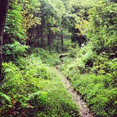 Shenandoah National Park -