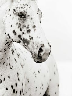 On the first day God created the horse, on the second day, he created spots.