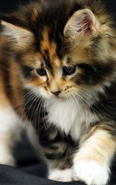 My cat does not talk as respectfully to me as I do to her. ~Sidonie-Gabrielle Colette  What a beautiful cat!!  W.S