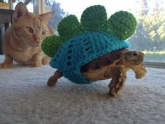 StegoTortoise--the cat's face kills me. He just doesn't  know what to think.