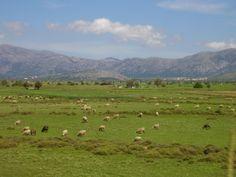 Lassithi vlakte Kreta