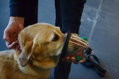 Carbon monoxide/oxygen masks on dogs | STRONGSVILLE- Approxoimately 40,000 pets die in house fires every year ...
