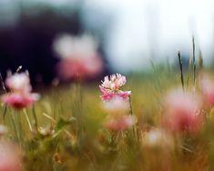Galerie flickr alice.b gardens
