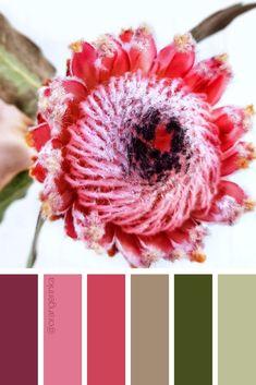 Calm color palette for home decor inspiration. Color Palette For Home, Red Colour Palette, Colour Schemes, Color Palettes, Color Trends, Color Blending, Color Mixing, Color Combinations Home, Protea Wedding