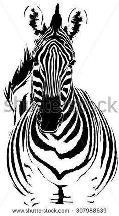 Zebra vector - stock vector