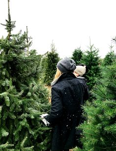 A Christmas Tradition of getting Christmas tree marks the beginning of the holiday season | The Fresh Exchange -★-