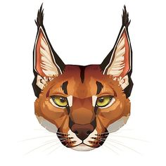 """Caracal Face"" by Paula Lucas. Part of the Feline Portrait series. Big Cats Art, Furry Art, Cat Art, Cute Drawings, Animal Drawings, Lucas Arts, Caracal, Animation, Animal Faces"