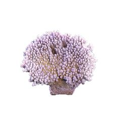 Table Coral – Large #459 $29.49 SHOP NOW at LivingColor.com Available in Green, Purple, Light Blue and Gold. Dimensions: 6.5″ x 5.3″ x 3″
