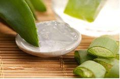 Mutfaklarda yaygın şekilde bulunan minik dikenli bir bitki olan Aloe vera bitkisine herkes aşinadır.Birçoğumuz aloe vera suyu içeren kremleri ve aloe vera suyu ile zenginleştirilmiş şampuanl