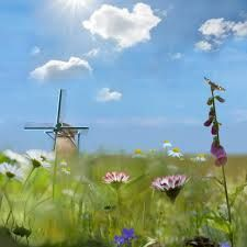 hollands landschap - Google zoeken