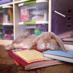 A Celebration of Pet Appreciation Week… Book Style