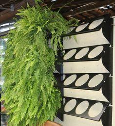 15 dicas de plantas para jardim vertical que fazem a diferença Flower Wall, Flower Pots, Flowers, Vertical Garden Plants, Round Pool, Side Yards, Garden Pool, Garden Chairs, Amazing Gardens