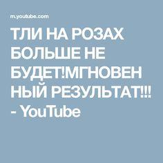 ТЛИ НА РОЗАХ БОЛЬШЕ НЕ БУДЕТ!МГНОВЕННЫЙ РЕЗУЛЬТАТ!!! - YouTube
