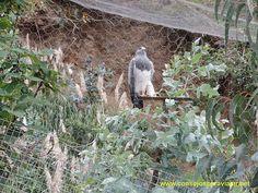 https://flic.kr/s/aHskqUUaqU   Zoologico natural Amaru en Cuenca   A 25 minutos a las afueras del centro de la ciudad de Cuenca se encuentra el zoologico natural Amaru, se caracteriza por que el zoologico se encuentra en las faldas de los bosques, y los animales estan en contacto directo con la naturaleza, vale la pena visitar