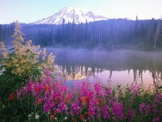 Wildflowers in Bloom by Lake on Mount Rainier Photographic Print at AllPosters.com