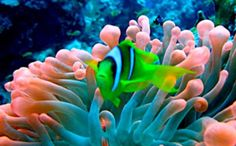 Algas marinhas: emagrecem e podem impedir transmissão viral Post novo e mais que útil!!! Saiba o poder das Algas... você vai se surpreender... #algasmarinhas #alimentaçãosaudável #belezaeestética #saúde #fitness #éfitestilodevida #tatisacramento