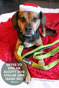 Enter to win an Alcott Adventure Nylon Collar and Leash Set - Stocking Stuffer Giveaways - Great Christmas Gift for your dog! #sponsored  http://www.beaglesandbargains.com/stocking-stuffer-giveaway-alcott-collar-leash-set/