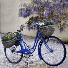 Blue Bike Photographic Print on Wrapped Canvas
