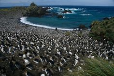 Welcome to Macquarie Island, which is home to an incredible four million penguins of all shapes and sizes