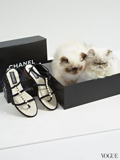 """Charlie and Tiramisu (nickname: """"Susy"""") are brother and sister, and just so lovely. And the Chanel pearled sandals are rather gorgeous too."""