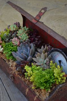Succulents in tool box - I like the moss around the sides.
