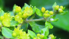Horticulture, Fruit, Garden, Plants, Inspiration, Biblical Inspiration, The Fruit, Lawn And Garden, Gardens