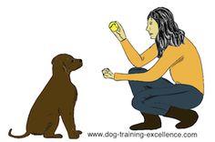 Dog Training Obedience Golden Retriever - - Dog Training Tips Recall - Dog Training Business Logo - Best Dog Training Collar - Deaf Dog Training, Dog Training Equipment, Cat Toilet Training, Dog Training School, Dog Training Courses, Dog Training Methods, Training Your Puppy, Dog Sign Language, Pet Sitting Services