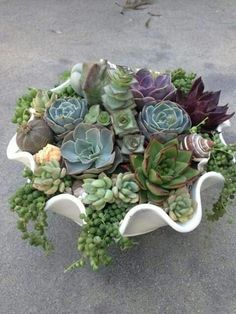 care - How easy are succulents to be Succulent care - How easy are succulents to be? - -Succulent care - How easy are succulents to be? Succulent Gardening, Succulent Care, Container Gardening, Garden Plants, Indoor Plants, Organic Gardening, Succulent Terrarium, Air Plants, Indoor Gardening