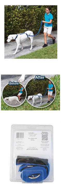[Visit to Buy] Nylon Pet Dog dog harness Leashes for large dogs  Instant Trainer Rope Walking Training dog harness leash Blue #Advertisement
