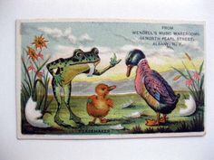 1880s Victorian Era Trade Card Frog and Duck Fighting Music Store Albany NY