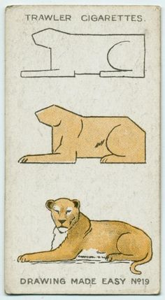 How to Draw Animals (3 easy steps to a female lion). Trawler Cigarettes card no. 19