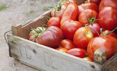 Как правильно дозарить и хранить томаты?