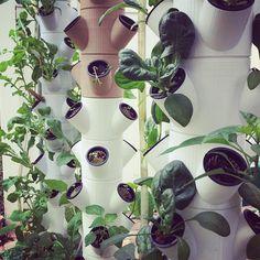 Die besten 25 hydrokultur ideen auf pinterest hydrokultur garten g rtnern und wachsenden - Indoor krautergarten ...