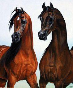 Bay and dark bay arabs. Egyptian Arabian Horses, Arabian Art, Horse Artwork, Horse Paintings, Cowboy Horse, Horse Face, Watercolor Cat, Horse Drawings, Horse Print