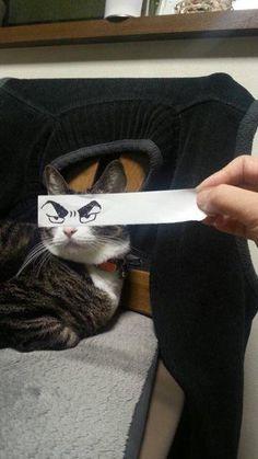 Les Petits Félins: Les Japonais ont une nouvelle lubie : dessiner des yeux façon manga pour leurs chats - Frawsy
