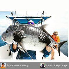 Monster big ass GT! Hell of a fish! @captcameronmundy  #gt #gtfishing #killedit…
