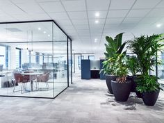 Modern Office Design, Office Interior Design, Office Interiors, Glass Office Partitions, Malboro, Agency Office, Green Office, Future Office, Clinic Design