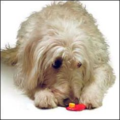 Teach Your Dog To Respond To The Clicker