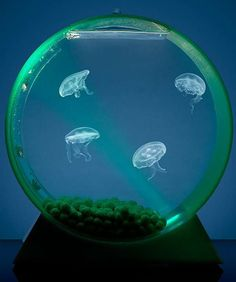 Named the Best Product of the Year at Global Pet Expo, the innovative Jellyfish Tank brings the mysterious world of jellyfish to your desktop.