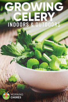5 Tips for Growing Celery including growing celery from seed