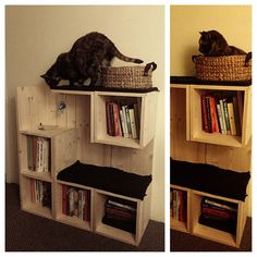 Like the bookshelf and cat tree concept
