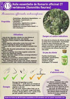 L'huile essentielle de romarin à verbénone : propriétés et utilisation sans danger (Rosmarinus off.)