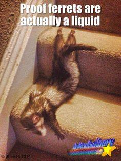 liquid ferret lol