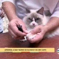 'É de Casa' ensina a dar banho ecológico em gatos; veja vídeo