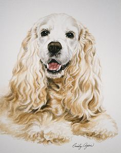 Cocker Spaniel by Cindy Agan Watercolor ~ 13 x Dog Paintings, Watercolor Paintings, Dog Anatomy, Cocker Spaniel Puppies, Watercolor Animals, Dog Portraits, Dog Art, Dog Pictures, Animal Drawings