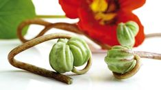 Seed Schiffe der Kapuzinerkresse (Tropaeolum majus) , close-up Korn, Pesto, Seeds, Place Card Holders, Stuffed Peppers, Baking, Vegetables, Health, Flowers