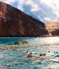 If I got chance to visit Lanai, watching the dolphins would be a must! Maybe I could even swim with them! This was taken by my sorority little sister on one of her trips to the Pineapple Island. #iheartlanai #hawaii