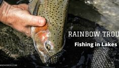 Want to know how to catch trout in a lake? Don't get skunked any longer and star. Want to know how to catch trout in a lake? Don't get skunked any longer and start filling that stringer. Trout Fishing Bait, Trout Bait, Trout Fishing Tips, Fishing Knots, Fishing Guide, Fishing Tricks, Crappie Fishing, Bass Fishing, How To Catch Trout